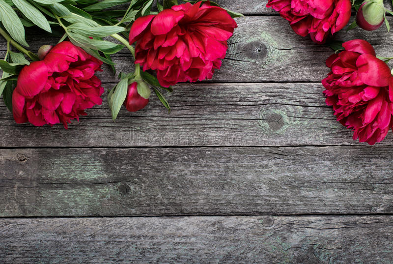 Download Pink Peonies Flowers On Rustic Wooden Background Selective Focus Stock Image