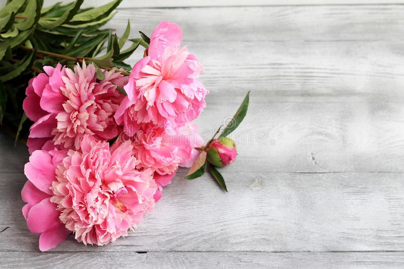 Pink peonies on grey wooden background. Copy space, top view. Mothers Day, Valentines Day, Birthday concept. Greeting card stock images
