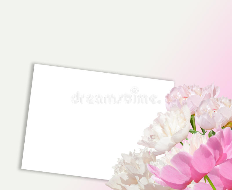 Pink peonies and white paper. Light pink peonies and white peonies. Close up royalty free illustration