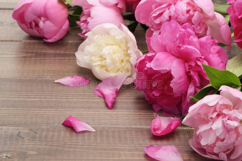 Pink peonies. On wooden background stock photos
