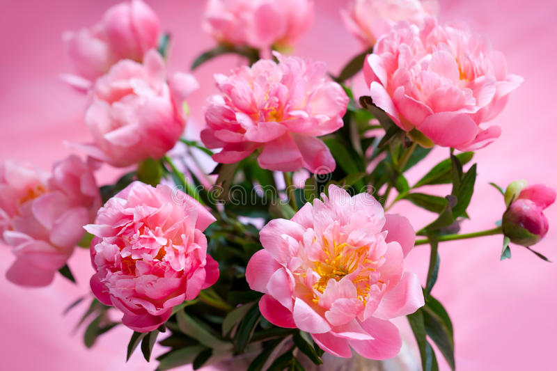 Download Pink peony stock image. Image of plant, botanical, bouquet - 15459381