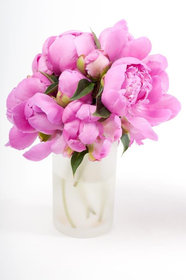 Download Pink peony stock photo. Image of gift, macro, natural - 30365196