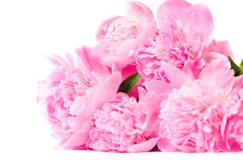 Download Pink peony flower stock image. Image of leaf, elegance - 14526261