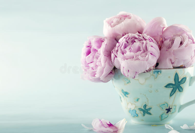 Pink peony flowers stock photo