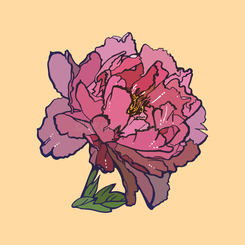 Pink peony, illustration stock images