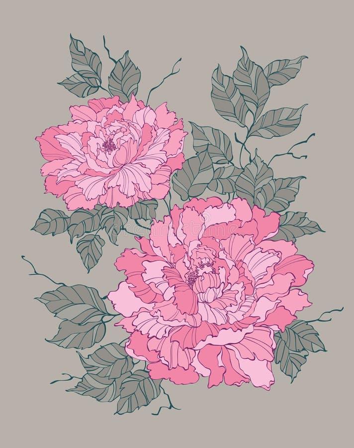Pink peony rose flower on grey background illustration. For decoration and design stock illustration