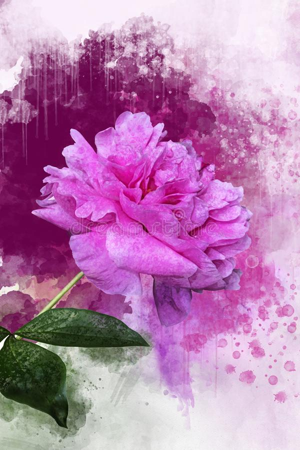 Pink peony watercolor background illustration. Spring flower royalty free illustration
