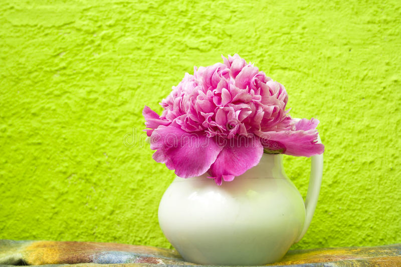 Pink peony in a white vase stock image
