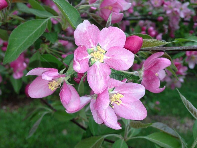Pink Petal Flower Free Public Domain Cc0 Image