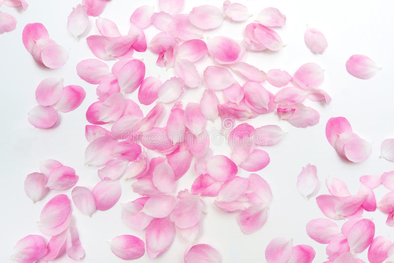 Download Pink Petals Royalty Free Stock Photography - Image: 13735157