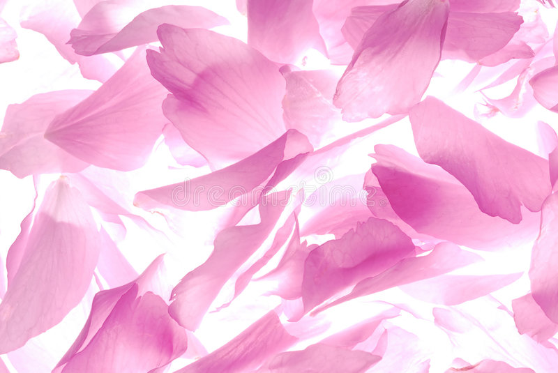 Download Pink Petals Royalty Free Stock Images - Image: 2305609