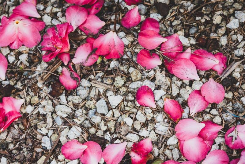 Pink petals on gravel ground shot top down. Background shot stock photo