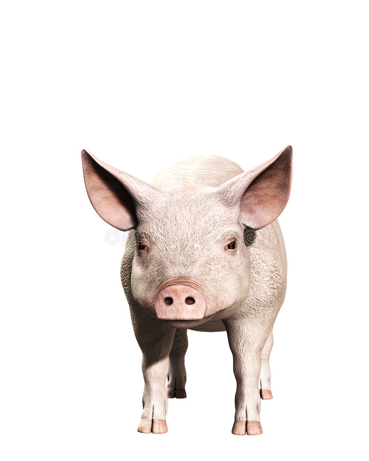 Download A Pink Pig 3 stock illustration. Image of snout, body - 5677952