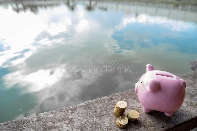 Pink piggy bank and gold coin pile on brown wooden with water and clouds background, step up growing business to success and royalty free stock photography