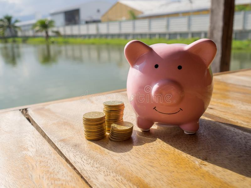 Pink piggy bank standing on wooden with gold coins pile and water background, Saving money for future plan and retirement fund royalty free stock photo