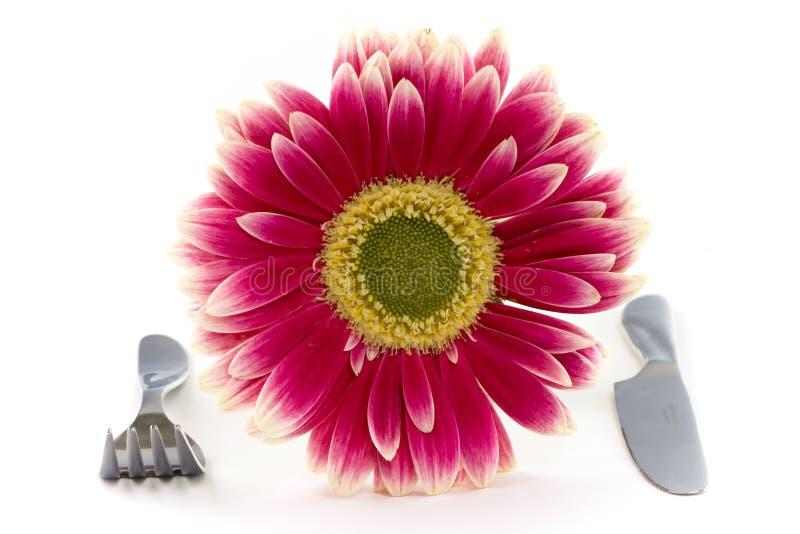 Pink plate stock photos