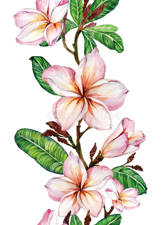Pink plumeria flower on a twig. Border illustration. Seamless floral pattern. Isolated on white background. Watercolor painting. royalty free illustration