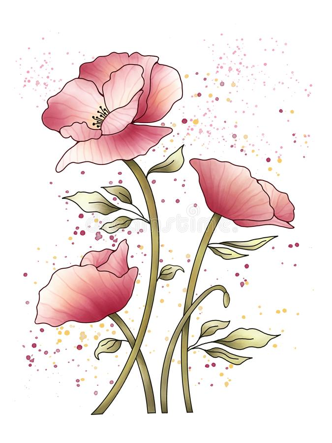 Pink poppies flowers painting illustration on white background. stock illustration