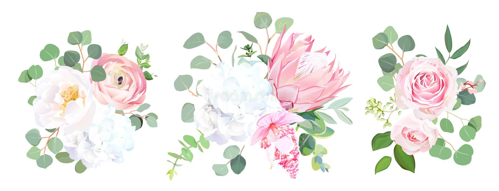 Pink protea, ranunculus, rose, medinilla, white hydrangea, seede. D eucalyptus, greenery vector design bouquets. Beautiful summer wedding flowers. Watercolor stock illustration
