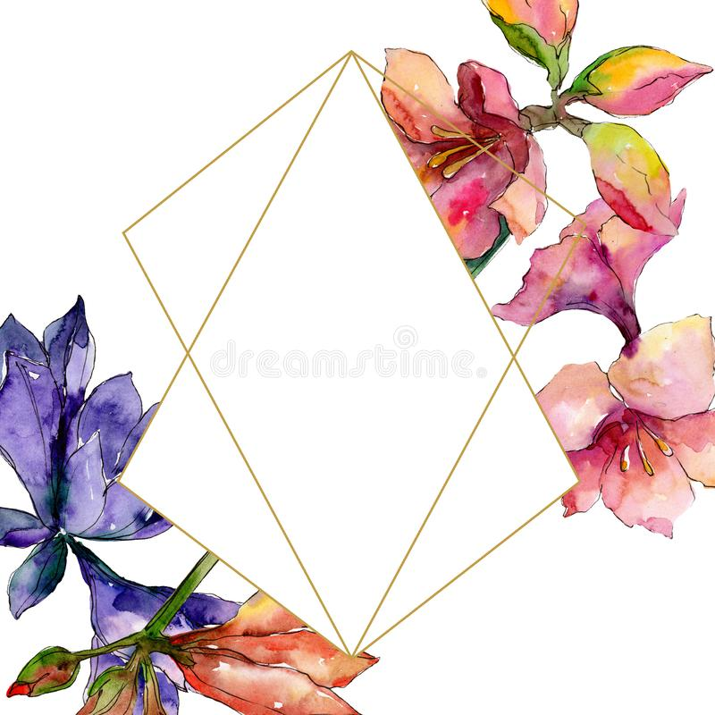 Pink and purple amaryllis floral botanical flower. Watercolor background illustration set. Frame border ornament square. royalty free illustration
