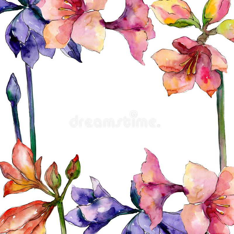 Pink and purple amaryllis floral botanical flower. Watercolor background illustration set. Frame border ornament square. stock illustration
