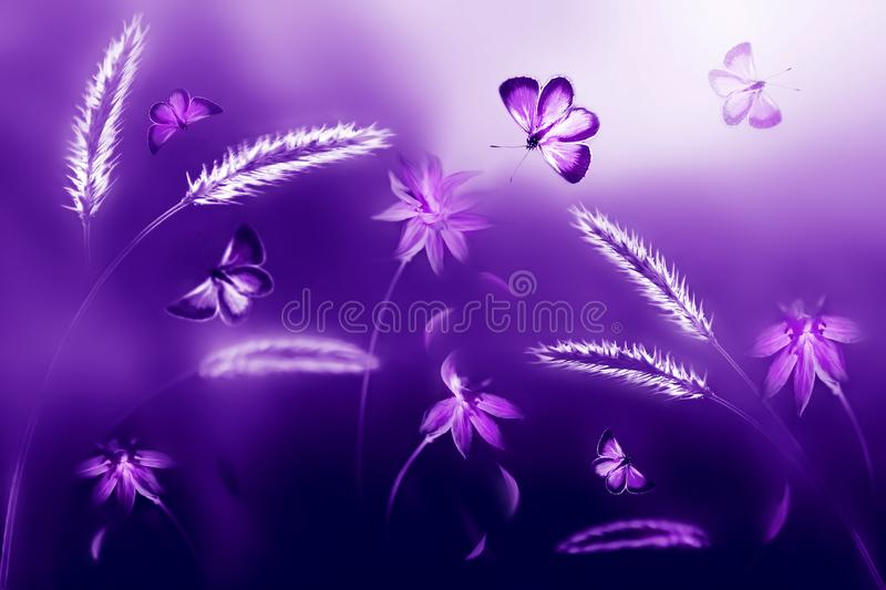 Pink and purple butterflies against a background of wild flowers in purple and violet tones. Artistic ultraviolet natural image. stock photography
