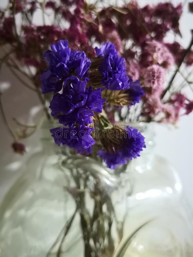 Pink and purple dried flower stock image