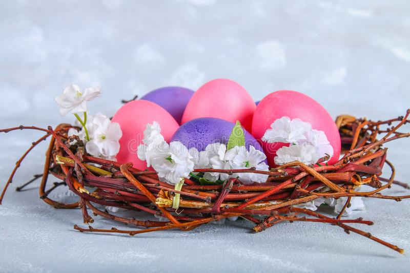 Pink and purple easter eggs in a nest with white flowers on a gray concrete background. royalty free stock image