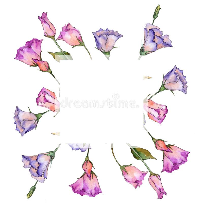 Pink and purple eustoma. Floral botanical flower. Wild spring leaf wildflower frame. Aquarelle wildflower for background, texture, wrapper pattern, frame or stock illustration