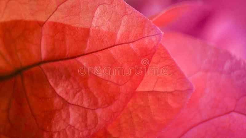 Pink and purple floral petals forming background stock image
