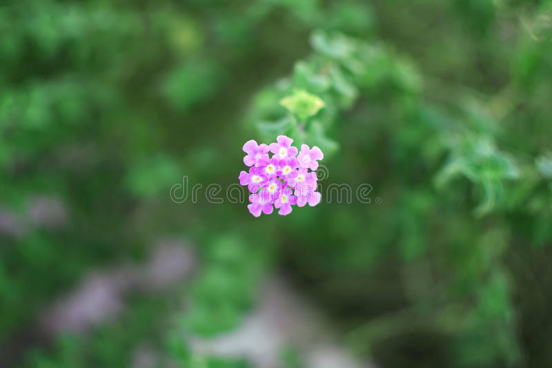 Pink and purple flower green leaves plants royalty free stock photo