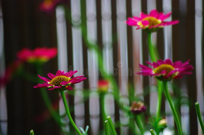 Pink, purple flowers on the balcony stock image