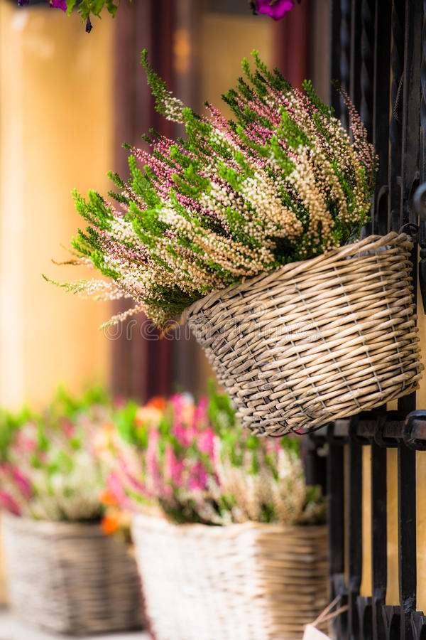 Pink and purple heather in decorative flower pot.  royalty free stock photo