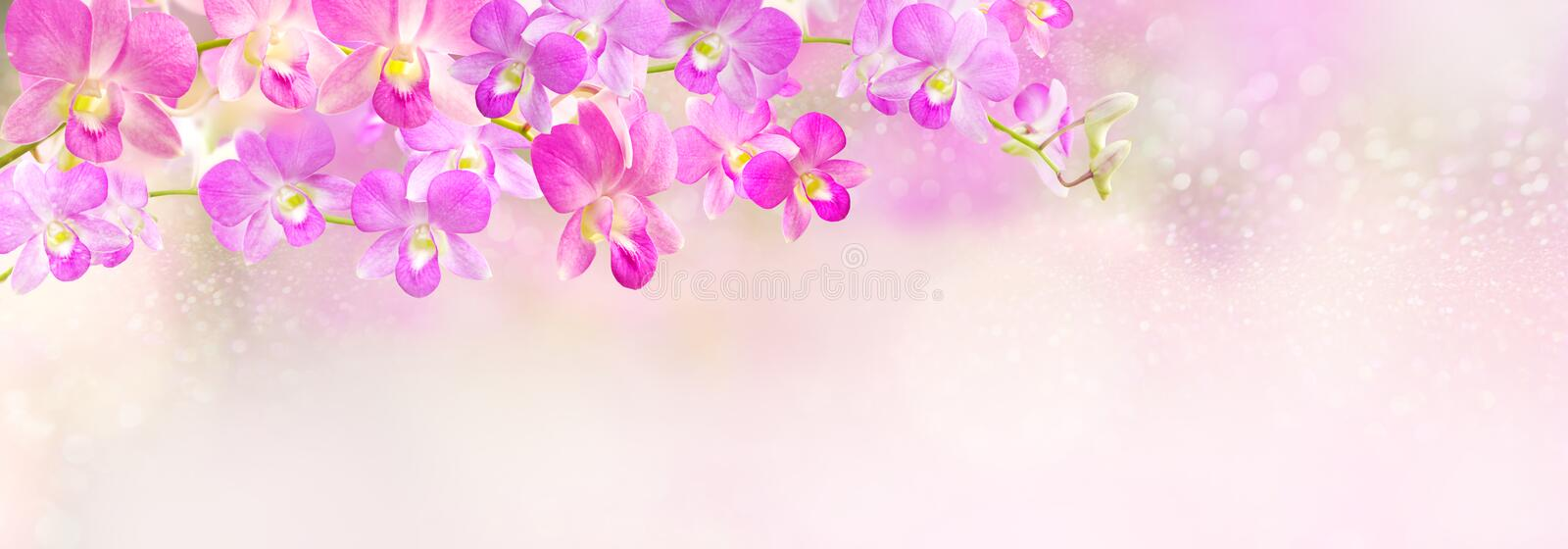 Pink and purple orchid flower header,banner background royalty free stock photos