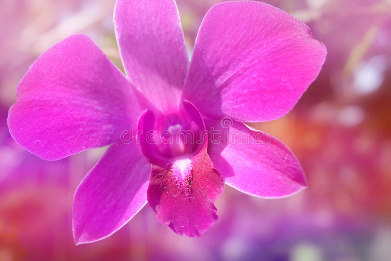Pink purple orchid in soft color style for Abstract background. stock photo