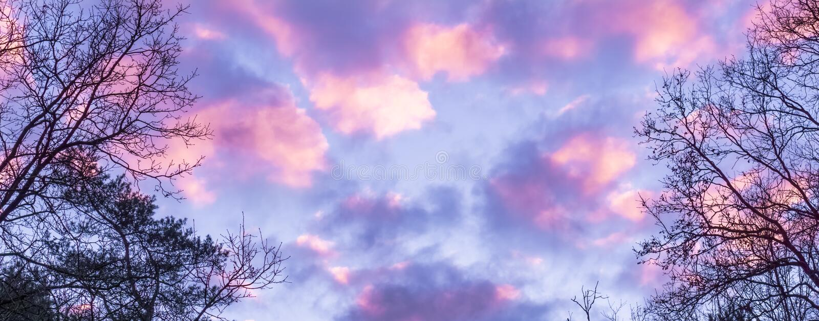 Pink and purple polar stratospheric clouds, a effect in the sky that sometimes rarely occurs in winter royalty free stock photo