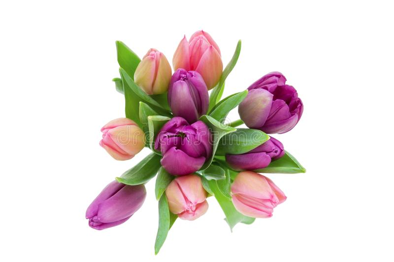 Pink and purple tulips with leaves isolated on white, top view stock images