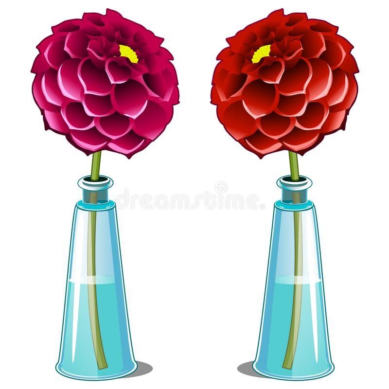 Pink and red blooming dahlia in glass vase. Vector flower isolated on white background. Illustration in cartoon style vector illustration