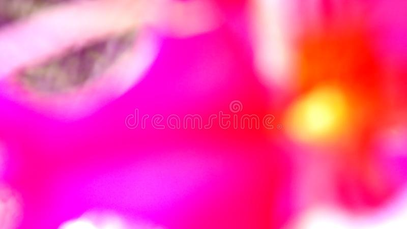 Pink Red Blur. Screaming Gaudy Pink Red and Yellow Colors of Nature Blossom in Summer stock images