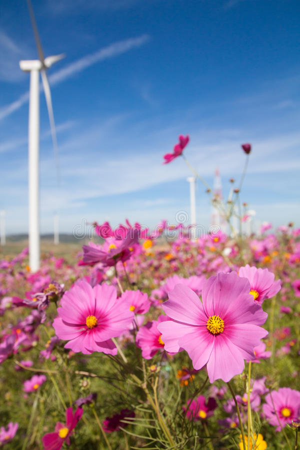 Pink And Red Cosmos Flowers Garden Background Stock Image