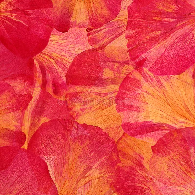 Pink red large peony petals. View from above. Abstract background vector illustration