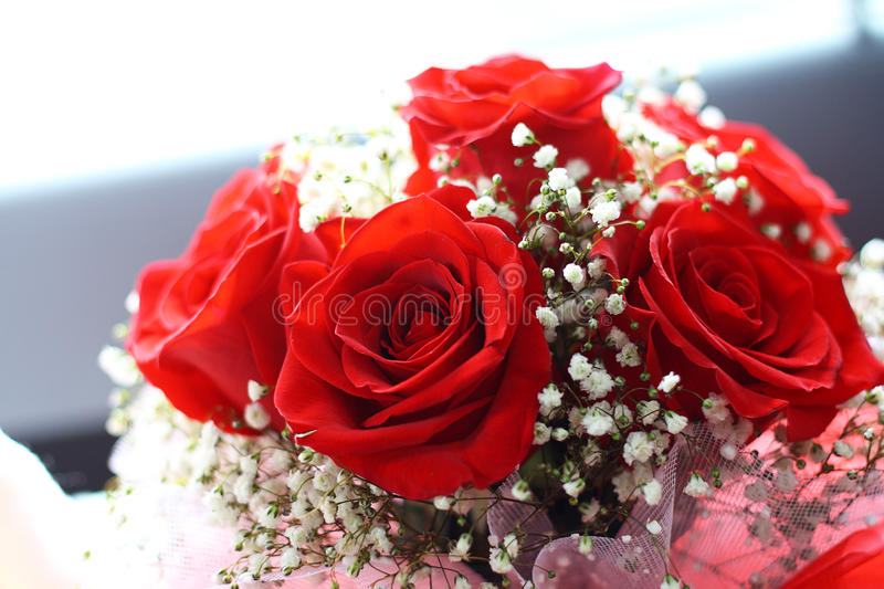 Pink red rose bouquet stock image. Image of nature, berries - 66820913