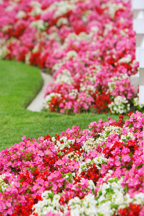Download Pink red and white flowers stock image. Image of flowers - 3633807