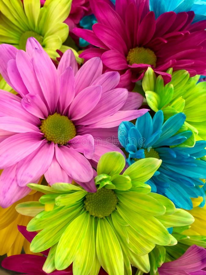 Pink Red Yellow Petaled Flower in Close Up Shot royalty free stock images