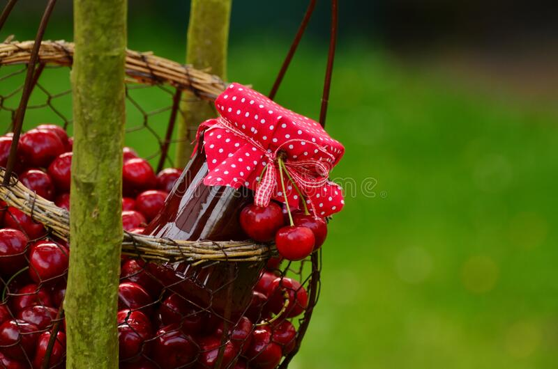 Pink Ribbon On Top Cherry During Day Time Free Public Domain Cc0 Image