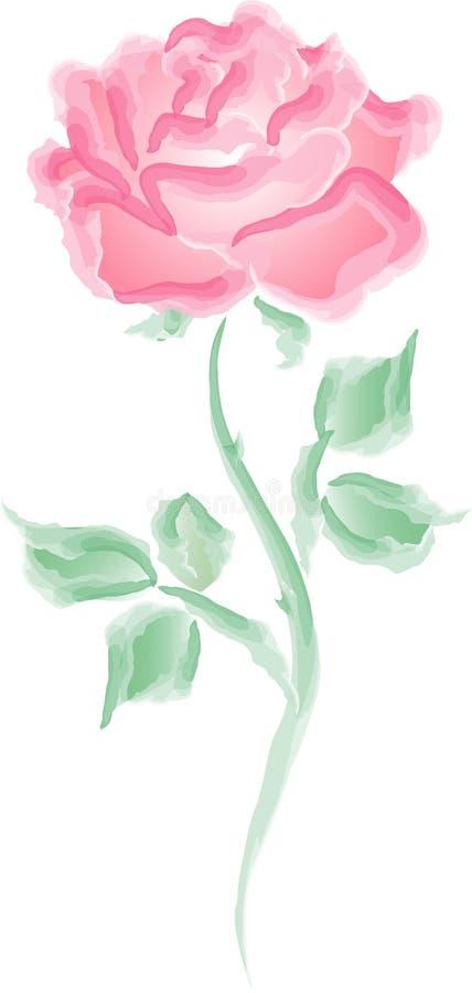 Pink rose. Illustration of a pink rose