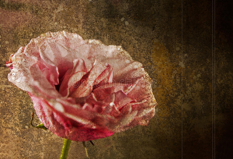 Pink Rose Against Grunge Background, Rough Style Stock Photo