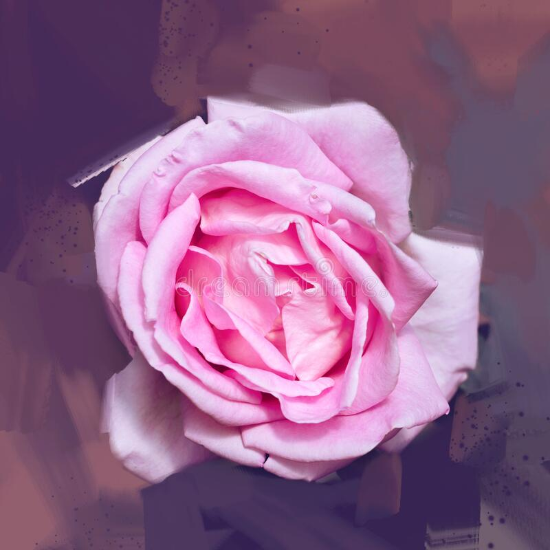 Pink rose background. Digital drawing, rose oil paint. Full frame, Space for text. background flower. Valentine stock photos