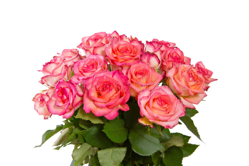 Pink rose bouquet isolated. royalty free stock image