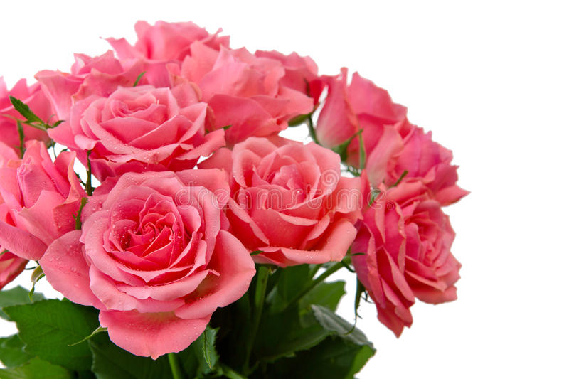 Pink rose bouquet isolated. stock photos